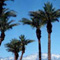 Marriott Palm Desert Timeshare