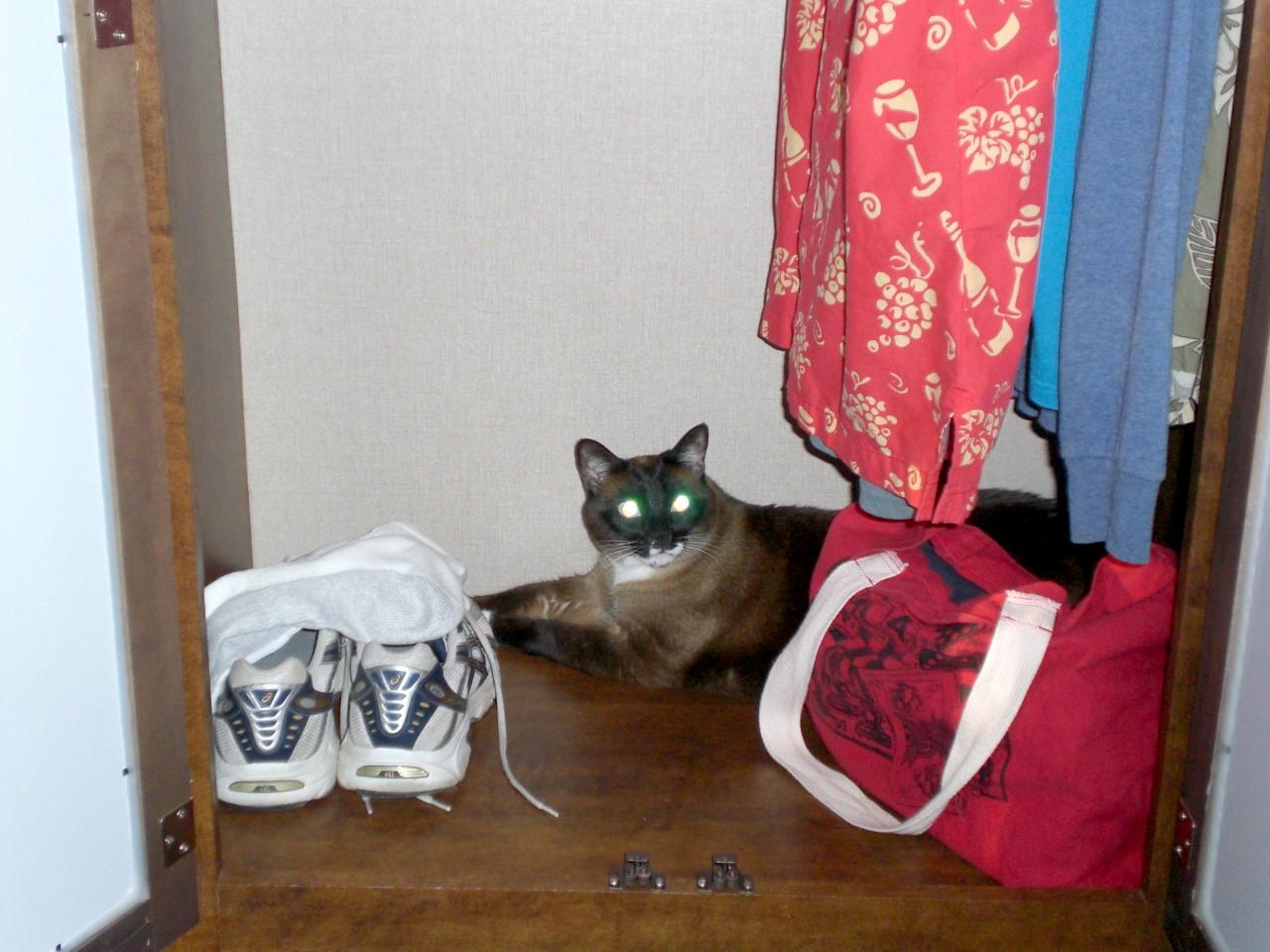 Barley cat in closet