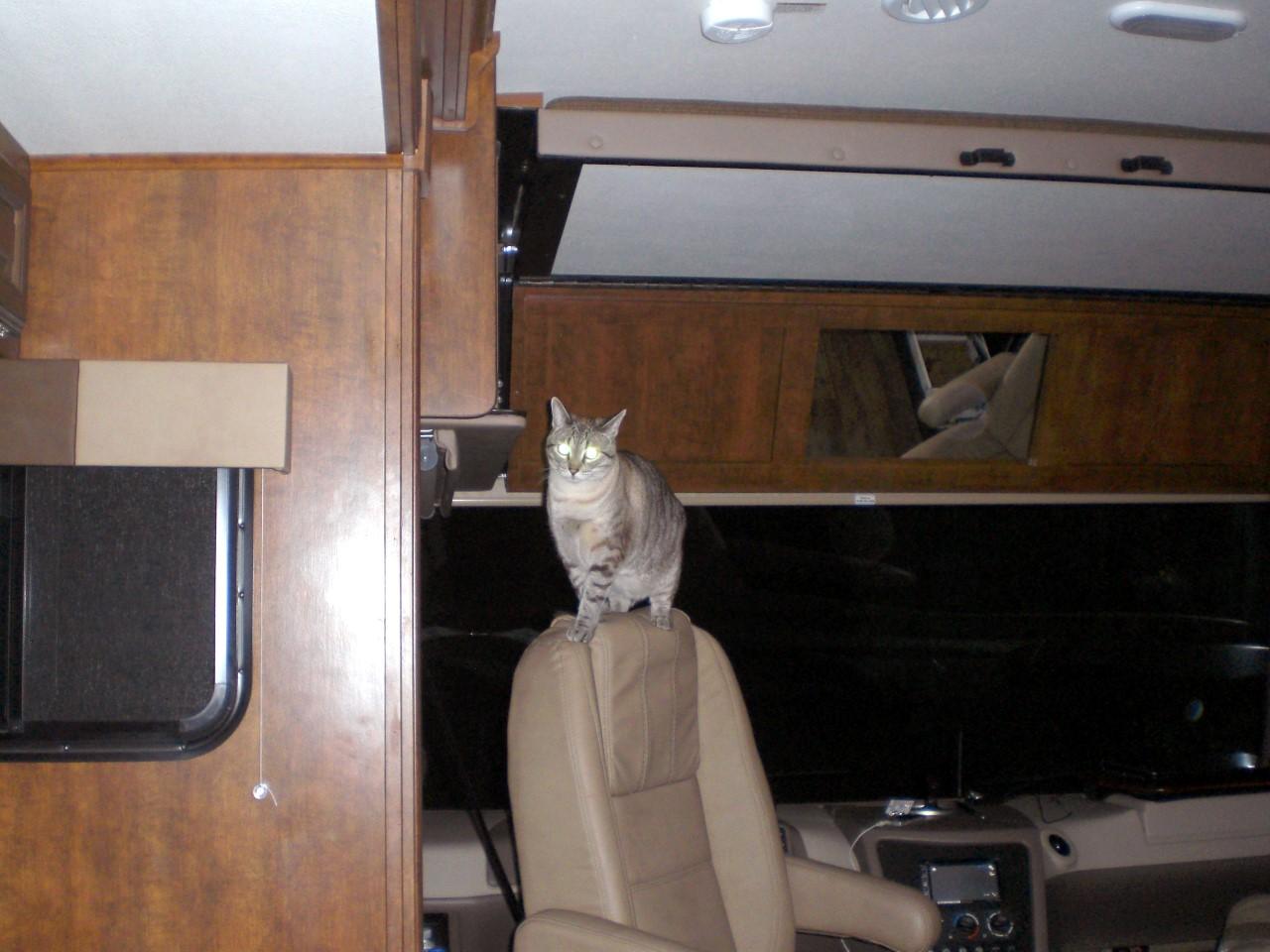 Cooper cat in RV