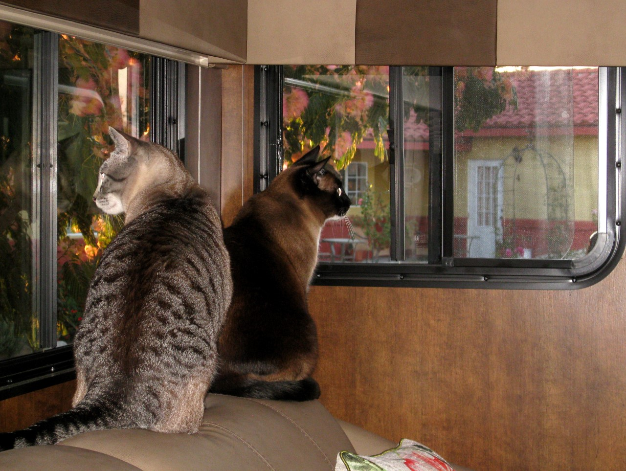 Cats Cooper and Barley looking out RV window